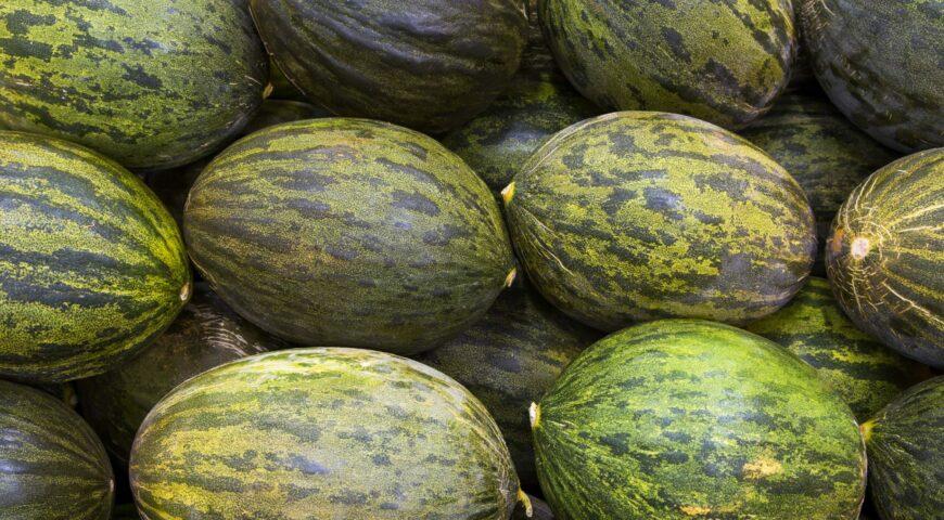 Fertirrigación del cultivo del melón