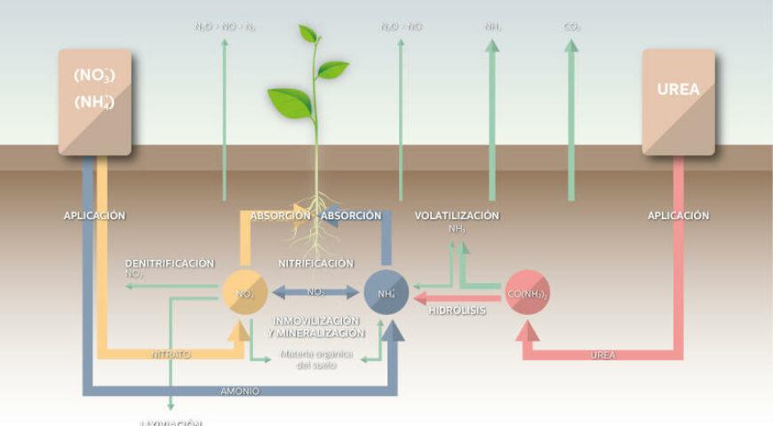 La optimización del uso del nitrógeno