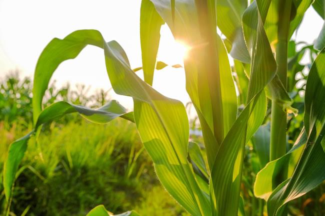 fertilizantes-soidos-convencionales-650