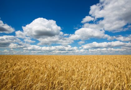 Fertilización de cobertera nitrogenada para cereal: Gama NEO® Especial Cereal
