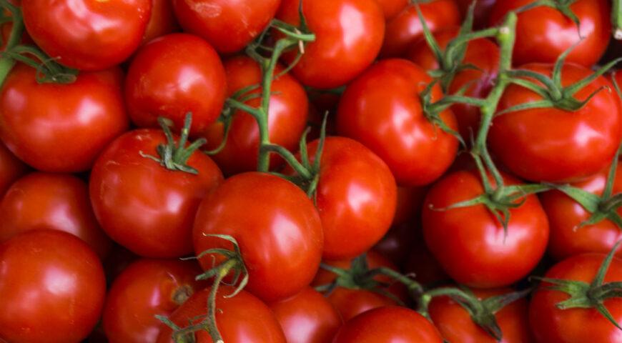 Fertilización del cultivo del tomate para industria, todo lo que debes saber