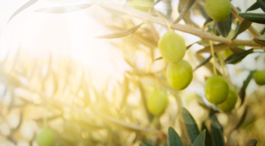 ¿Qué fertilizante es el más adecuado para la fertirrigación del olivar en suelos calcáreos?
