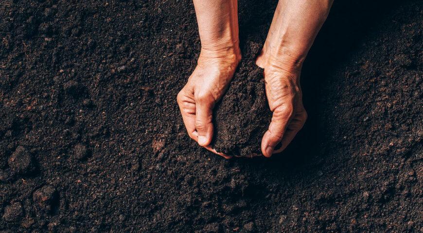 Soluciones para la fertilización en agricultura ecológica que no conocías