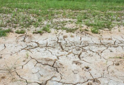 Manejo de la salinidad en las soluciones de suelo